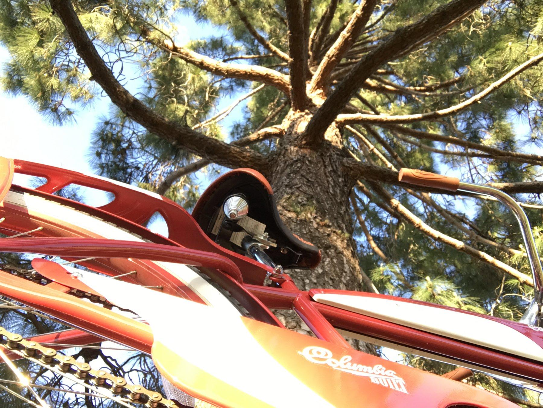 big tree 2.JPG