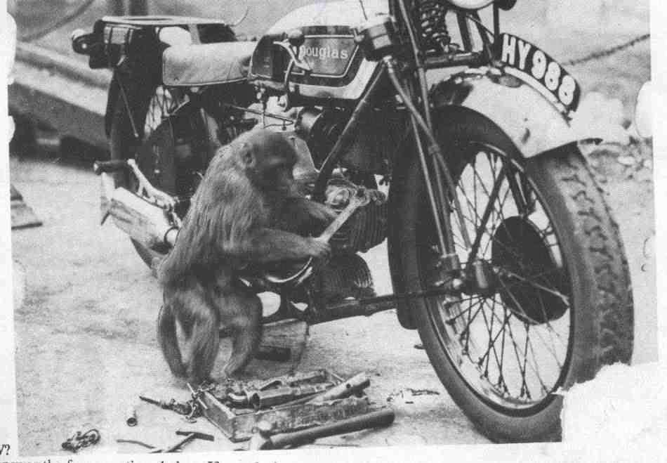 douglas-monkey-mechanic.jpg