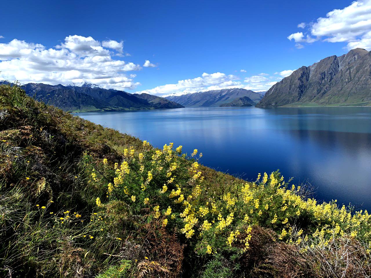 NZ (2).jpg