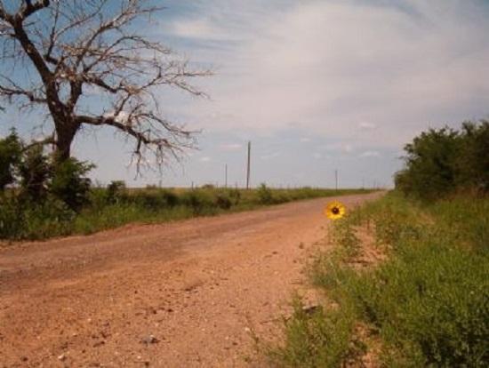 Sunflower road.jpg