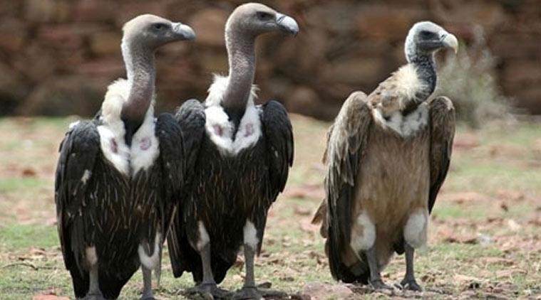 vultures-l.jpg